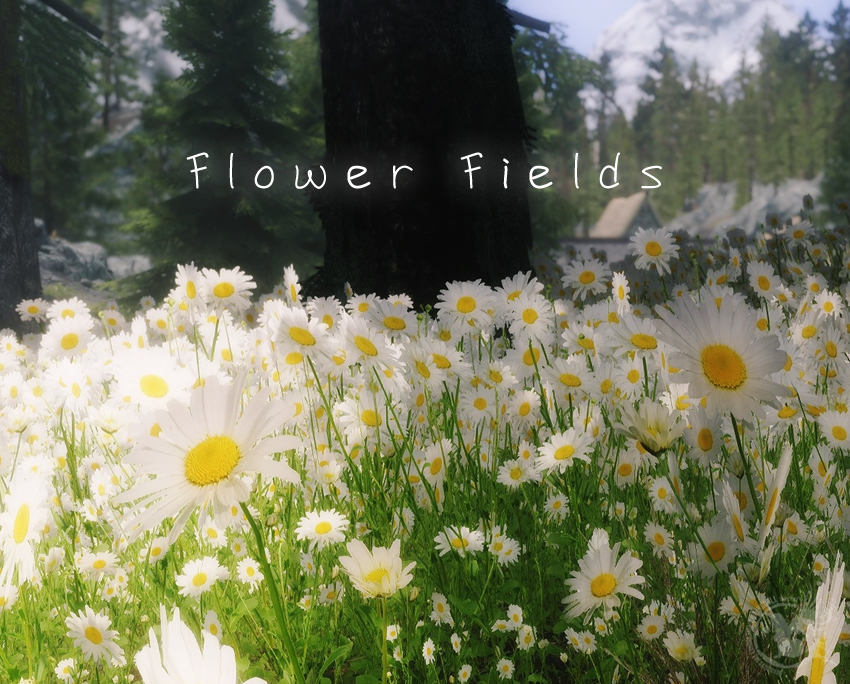 Flower-Fields00