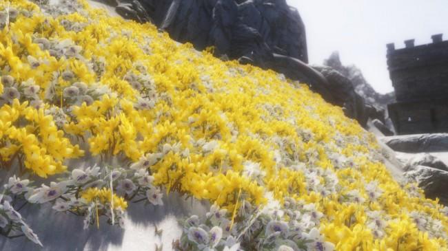 Flower-Fields10