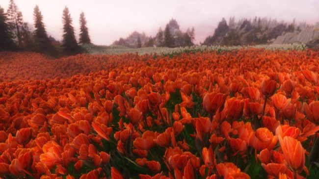Flower-Fields2
