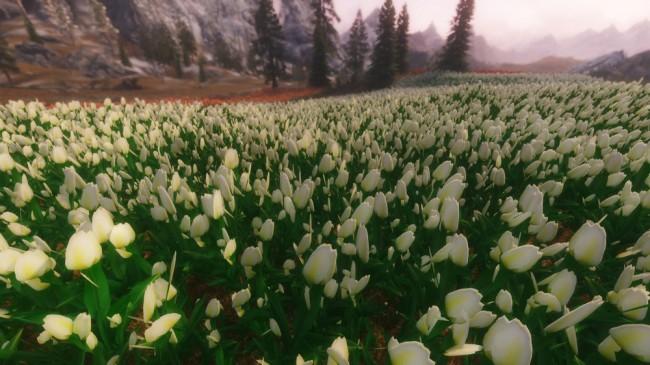 Flower-Fields3
