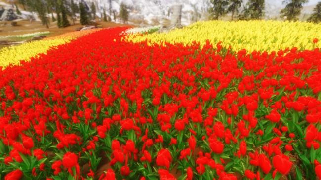Flower-Fields4