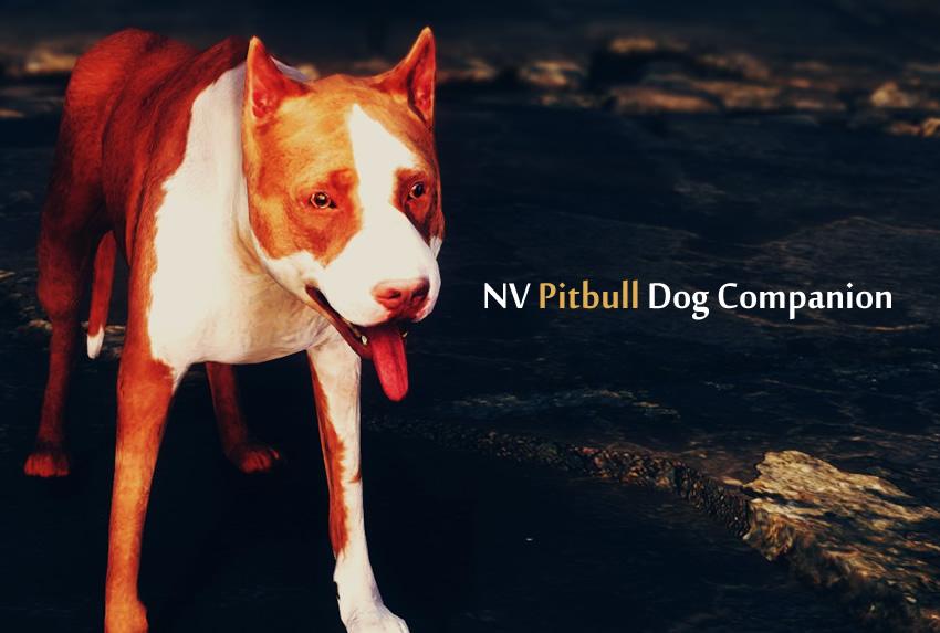 NV Pitbull Dog Companion