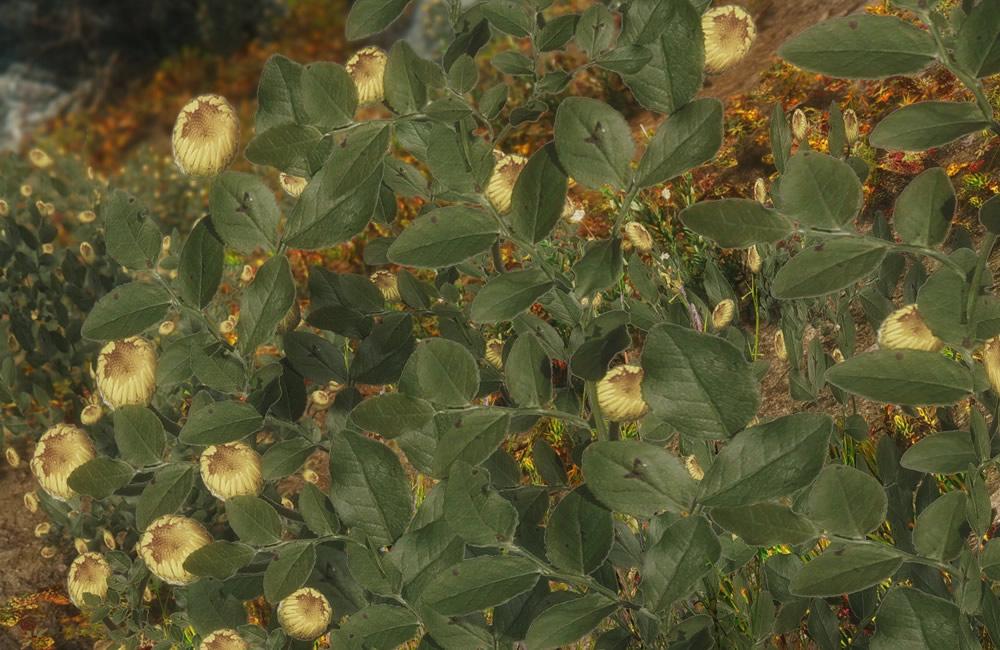 Renthal-HD-Flora2