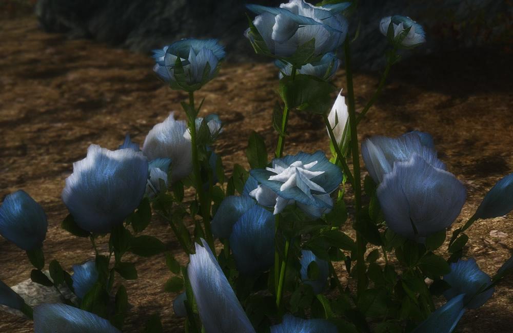 Renthal-HD-Flora4