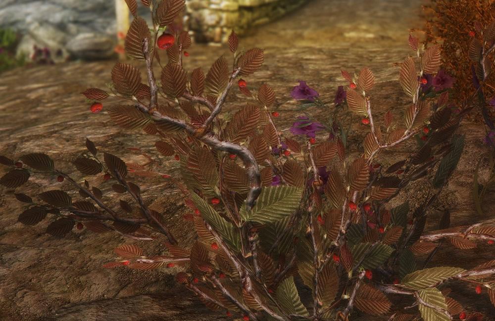 Renthal-HD-Flora5