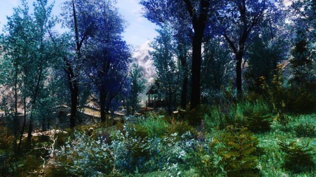 The-Blue-Forest4